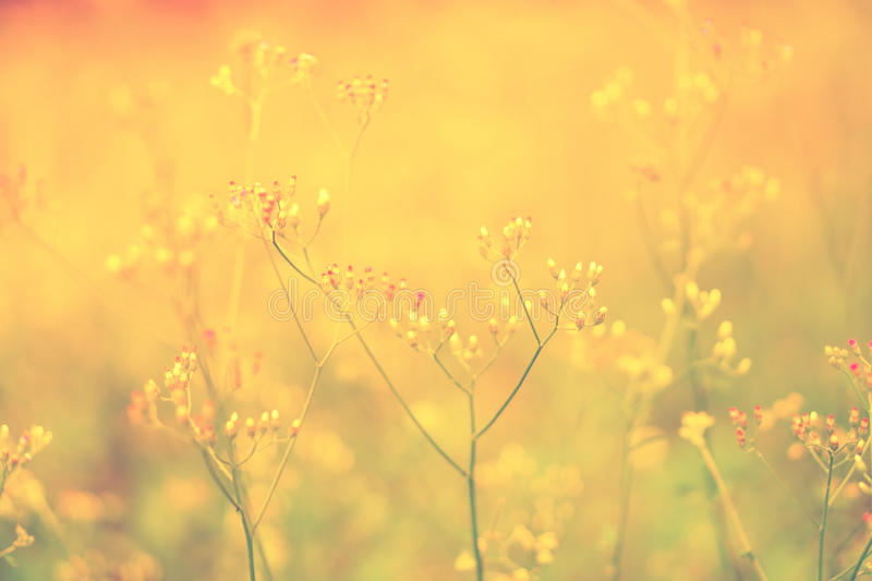Wild Grass flower , nature spring , autumn flower background. Wild Grass flower in orang sunshine , sunrise , nature spring , autumn flower background stock images