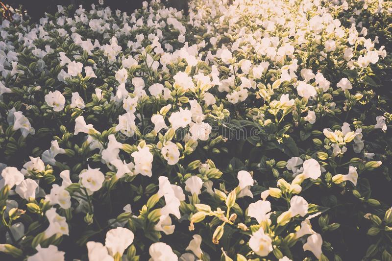 Wild grass flower vintage background little flowers, nature beautiful, toning design spring nature, sun plants .white flower in stock images