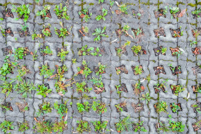 Wild grass sprouts between concrete tiles, eco-friendly parking paved sidewalk. Wild grass sprouts between concrete tiles of old eco-friendly urban paved royalty free stock photos
