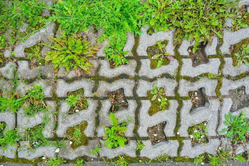 Wild grass sprouts between concrete tiles, eco-friendly parking paved sidewalk. Wild grass sprouts between concrete tiles of old eco-friendly urban paved stock image