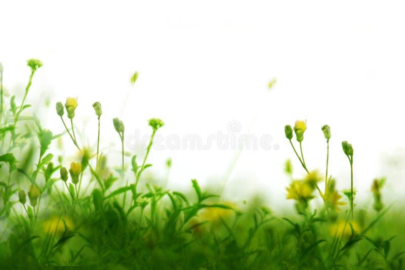 Wild grasses stock image
