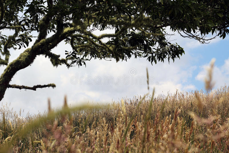 Wild Grasses stock photography