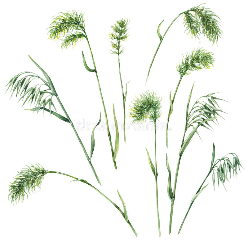 Wild Grasses Set royalty free illustration