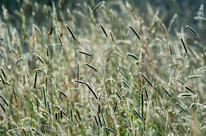 Wild grasses in summer sun light royalty free stock images