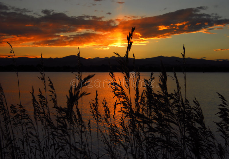 Wild grasses and sunset