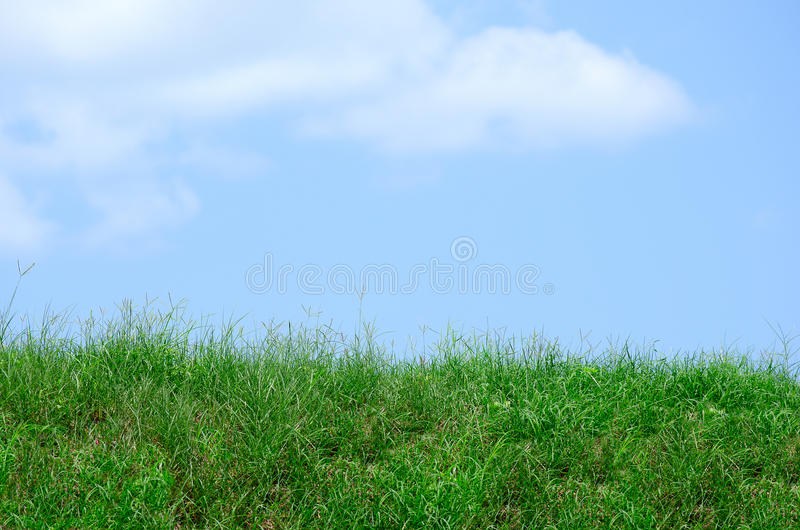 Wild green grass and weeds lawn or field hill against a blue sky with clouds. Ragged wild uncut rich green grass and weeds, field, meadow or lawn hill against a stock images