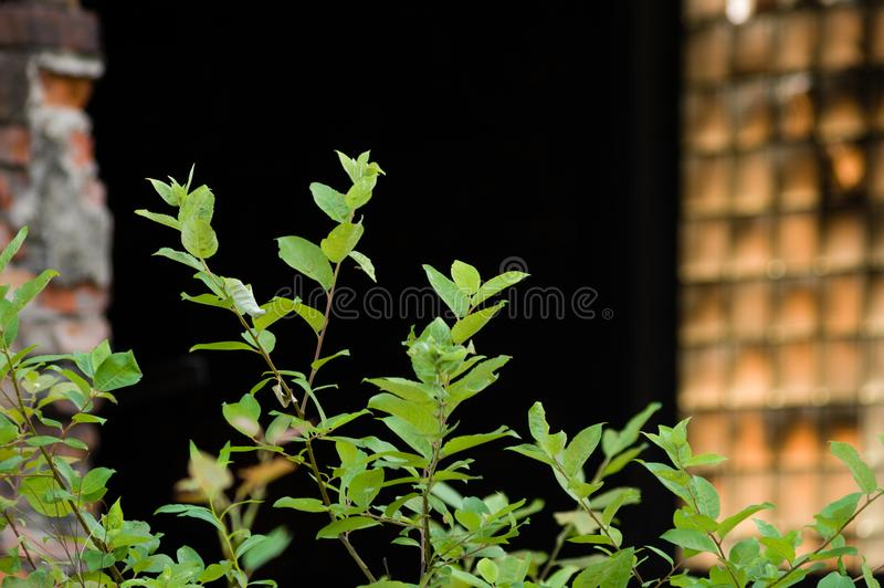 Wild growth in fron of a damaged brick building in an abandoned industrial area.  stock photo