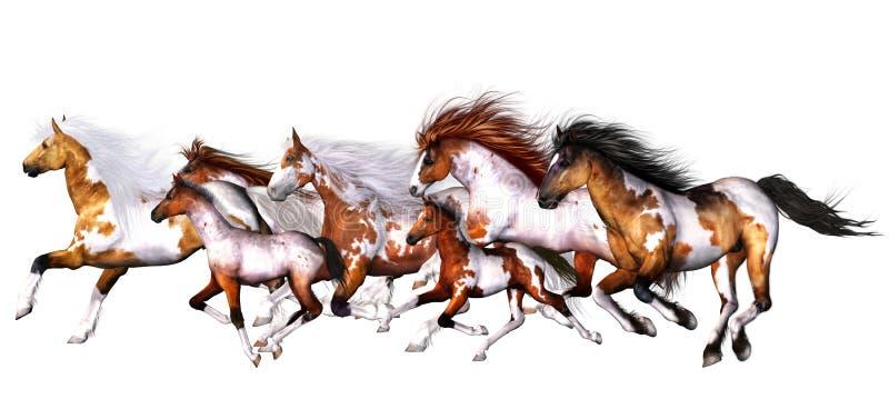 wild hästar vektor illustrationer