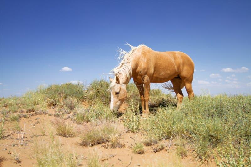 wild hästmustang royaltyfri fotografi