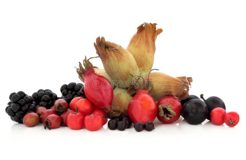 Wild höstfrukt arkivfoton