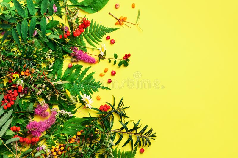 Wild healing herbs on bright yellow background. Alternative medicine concept, holistic approach. Top view, copy space, flat lay stock photography