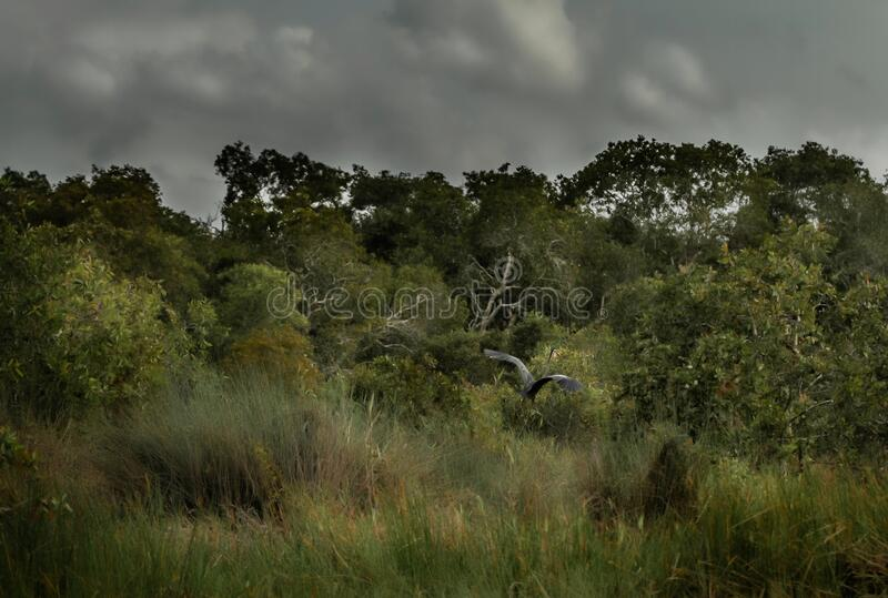 Impressionist landscape with wild herbs, trees and cloudy sky with amazing big bird. Wild herbs and cloudy dark sky, melancholic and poetic background stock images