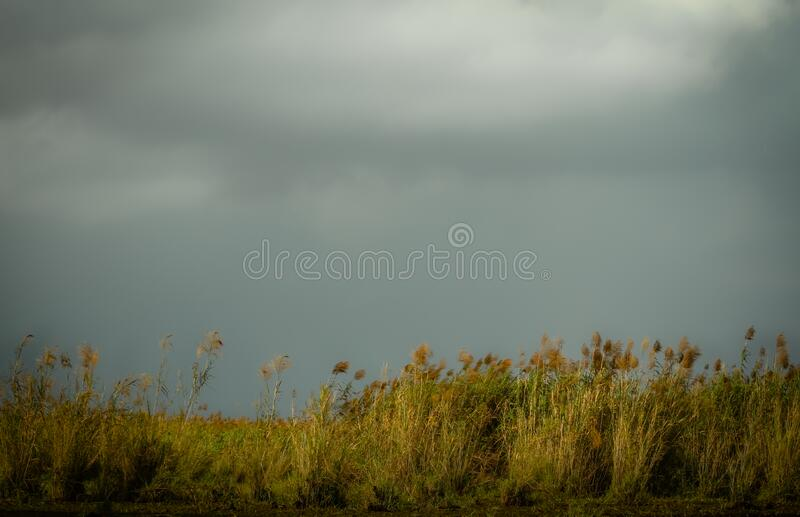 Impressionist landscape with wild herbs and cloudy sky. Wild herbs and cloudy dark sky, melancholic and poetic background, picturesque impressionist landscape stock photography