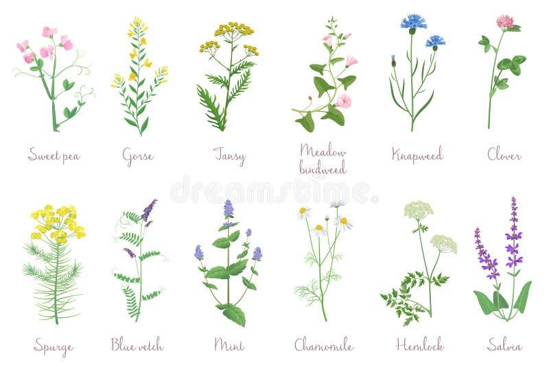 Flowers Names Stock Illustrations 315 Flowers Names Stock
