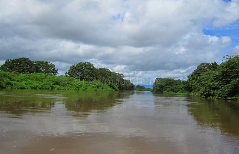 Wild het Levenstoevluchtsoord Costa Rica van de Cañozwarte stock afbeelding