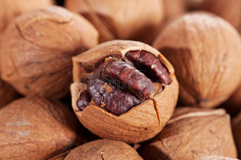 Download Wild Hickory Nuts Stock Photo - Image: 27043030