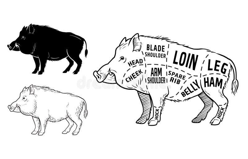 Wild hog, boar game meat cut diagram scheme - elements set on chalkboard. Vector illustration royalty free illustration