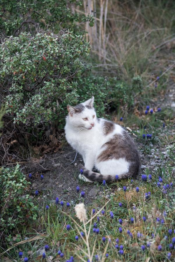 Wild homeless ragged cats walk in nature on the southern coast of the Crimea peninsula. Foros, Republic of Crimea - April 1, 2019: Wild homeless ragged cats walk stock image