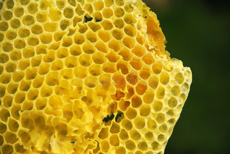Wild honey comb royalty free stock photography
