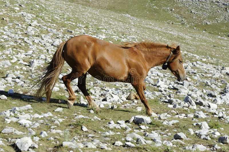 Download Wild Horse Stock Photo - Image: 18761660