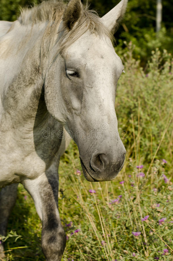 Download Wild Horse Stock Photography - Image: 21463662