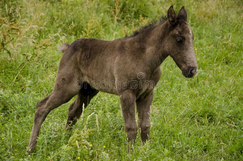 Download Wild horse stock image. Image of green, grass, outside - 23261001