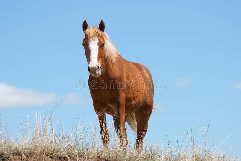 Download Wild Horse stock image. Image of roosevelt, grass, space - 26238011