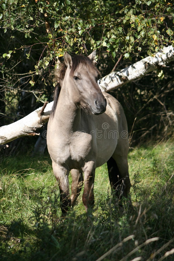 Free Wild Horse Royalty Free Stock Photo - 537275