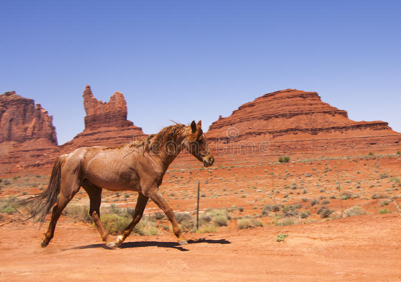 Wild horse galloping across the red desert royalty free stock images