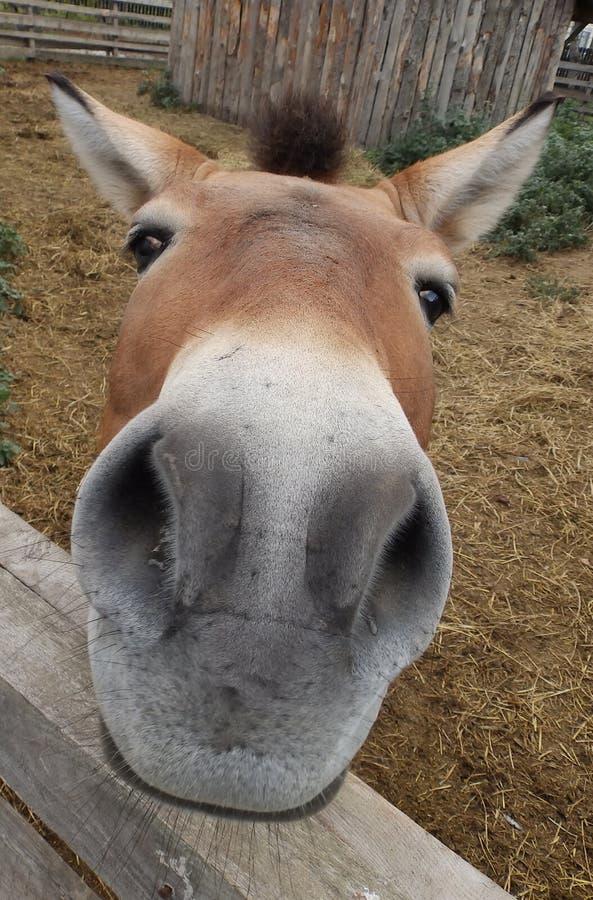 Wild horse head stock image