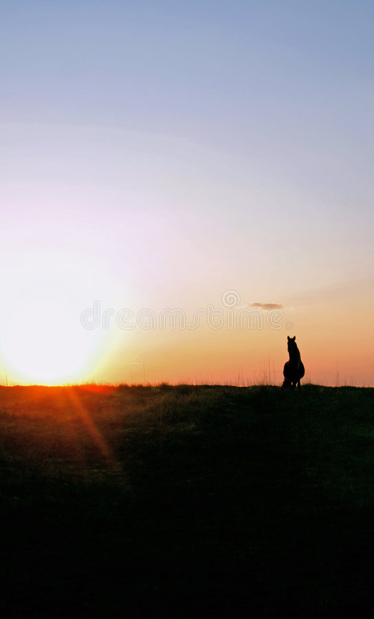 A wild horse on a hill sunset royalty free stock photography
