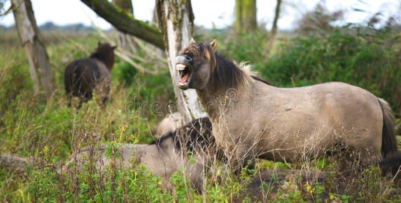 Wild horse stock photo