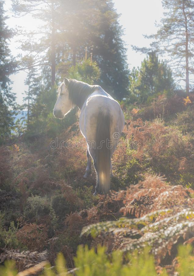 Free Wild Horse In The Forest Royalty Free Stock Photo - 136803365