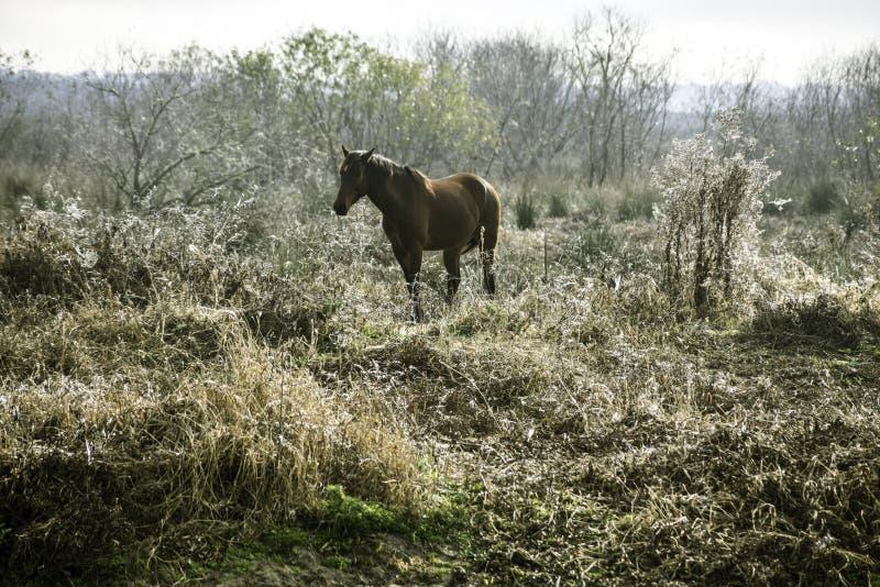 Download Wild Horse Stock Photo - Image: 83724803