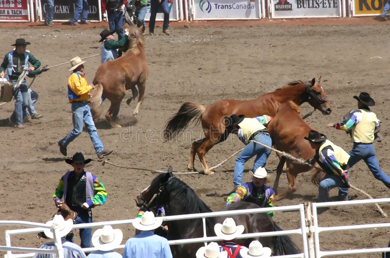 Download Wild Horse Round Up Editorial Photo - Image: 8809911