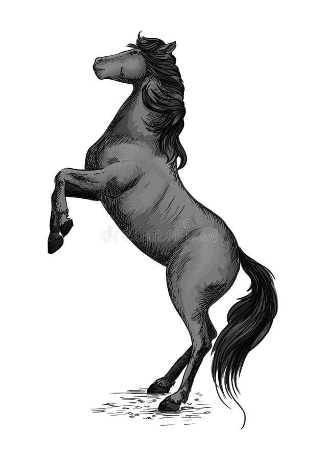 Wild Horse Stallion Rearing In Rage Stock Vector Illustration Of
