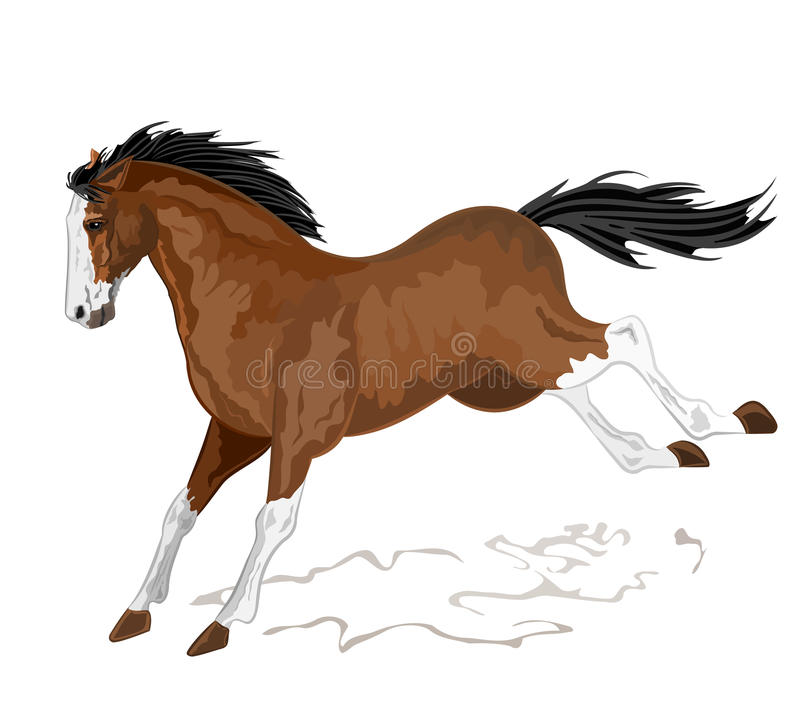 Download Wild horse stock vector. Illustration of animal, running - 39515077