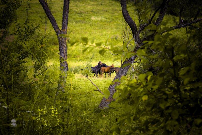 Download Wild Horses Stock Photos - Image: 10746213