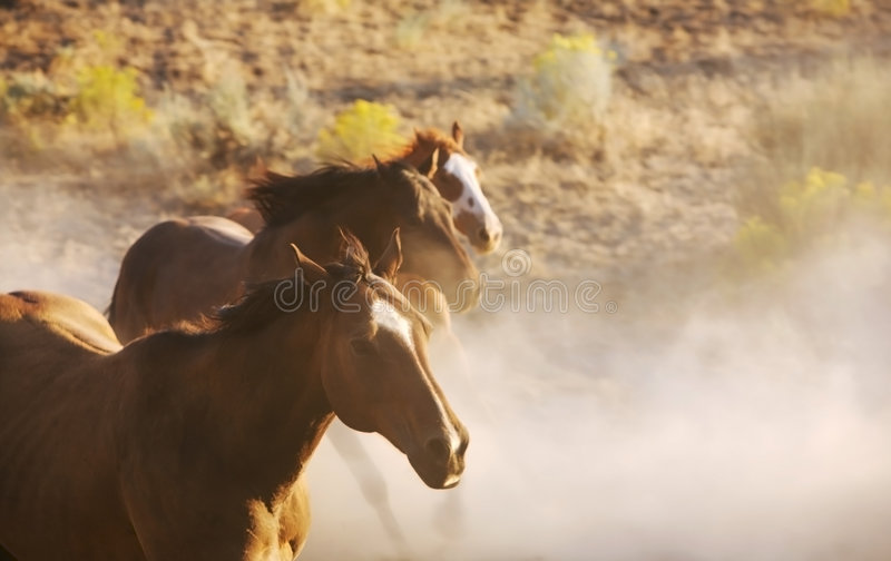 Download Wild Horses stock photo. Image of plant, sand, wild, freedom - 1974130