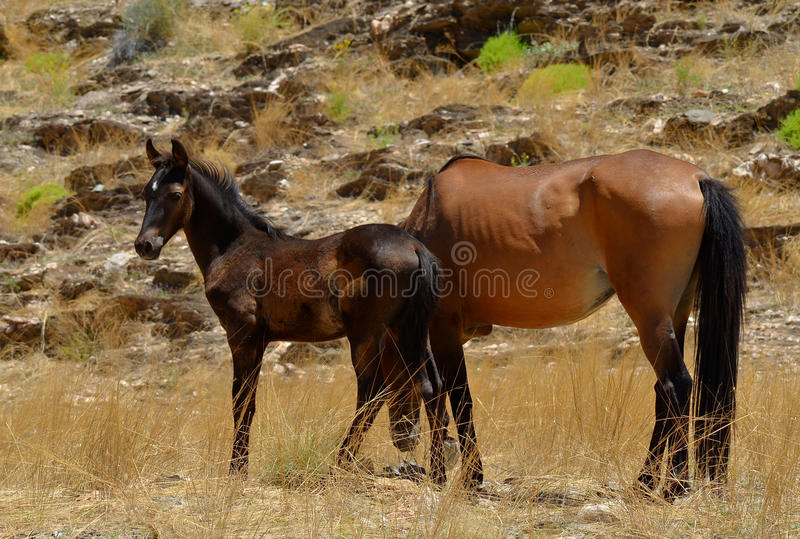 Download Wild horses stock photo. Image of grass, field, outdoor - 24063344