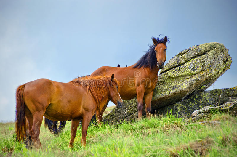 Download Wild horses stock image. Image of grass, rock, stone - 28218719