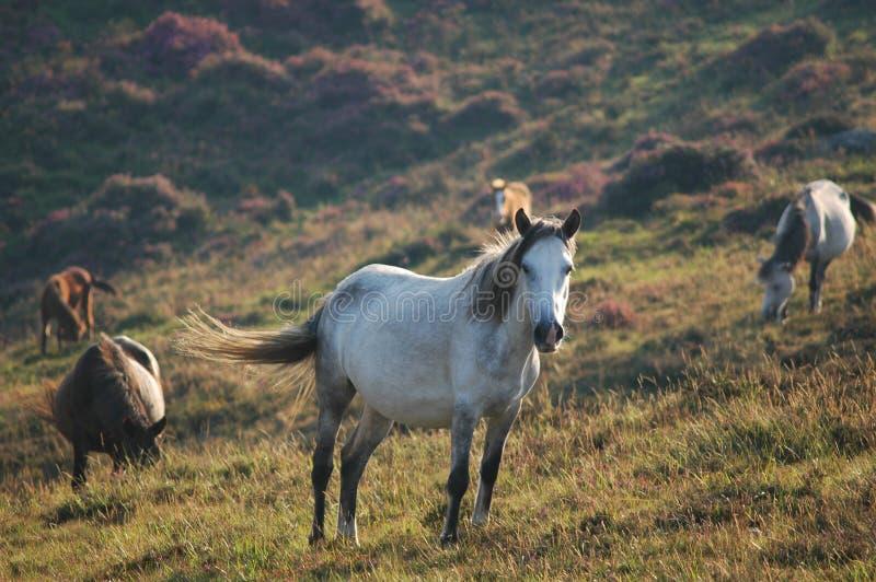 Download Wild horses stock photo. Image of grassland, equs, ride - 489278