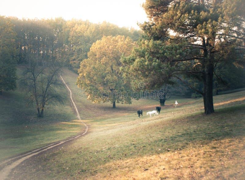 Wild horses on the autumn glade stock photo