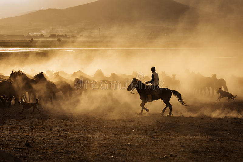 Wild horses of Cappadocia at sunset with beautiful sands, running and guided by a cawboy.  stock photos
