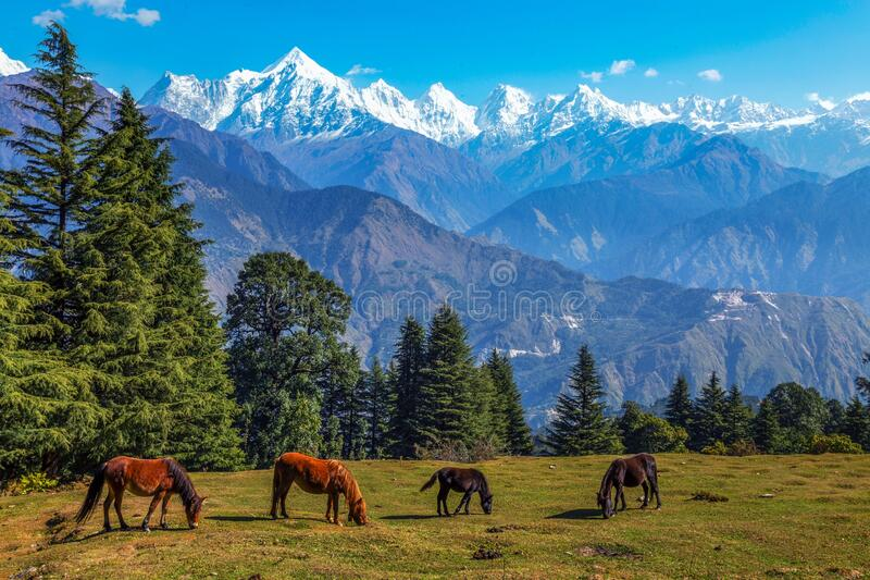 Himalayan mountain range with view of wild horses grazing at Munsiyari, Uttarakhand India. Wild horses graze the Himalayan meadows with view of majestic royalty free stock photos