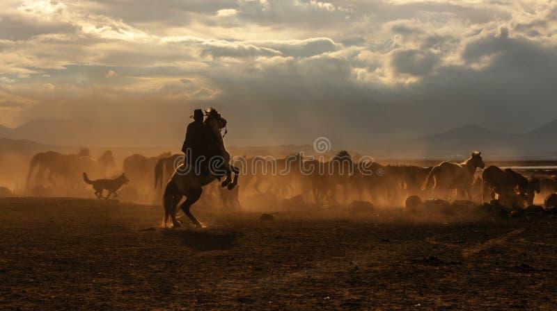 Wild horses at kayseri. Hormetci villagen royalty free stock photography