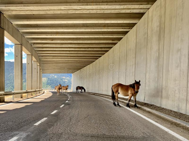 Wild horses on the road in a tunnel stock photo