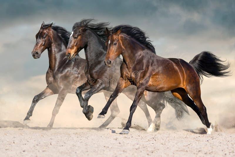 Horse herd run. Wild horses run in dark desert dust stock images