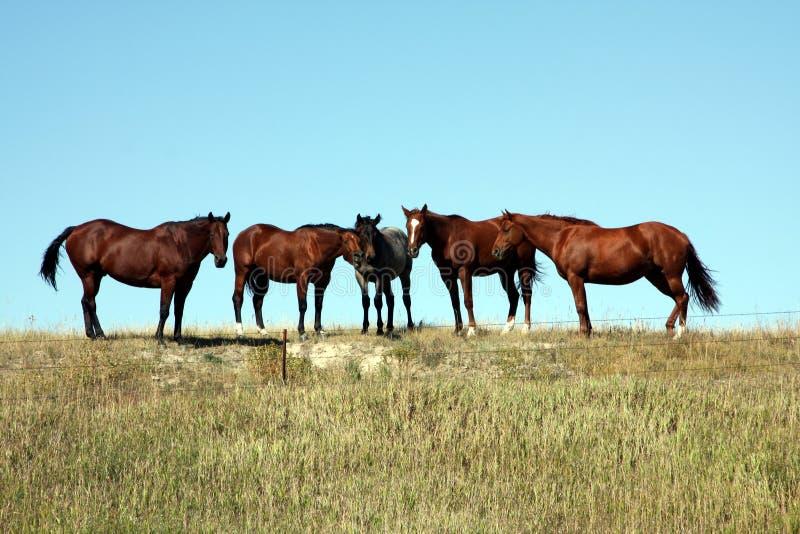 Wild Horses In South Dakota Stock Images