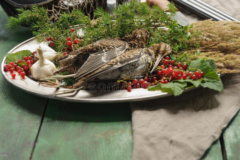 Wild hunting fowls in cooking. Two snipe or woodcock lie on metal dish. Wildfowl hunting. Wild hunting fowls in cooking. Two snipe or woodcock lie on metal dish royalty free stock image